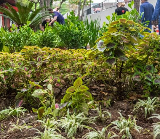 Fla Mulher e Fla Gávea promovem a recuperação dos Jardins da Gávea